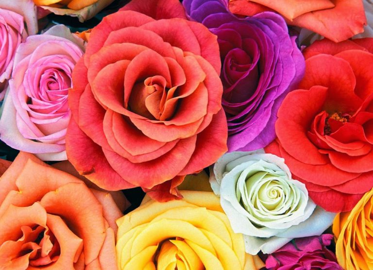 flowers-wallpapers-love-blooms-roses-bunch-of-flowers_beautiful-facebook-covers-768x556