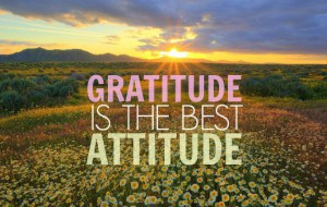 gratitude-is-the-best-attitude-whatsapp-dp-300x190