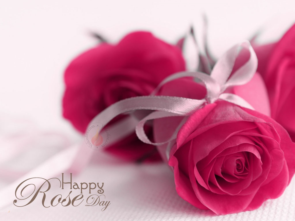 rose-day-whatsapp-dp