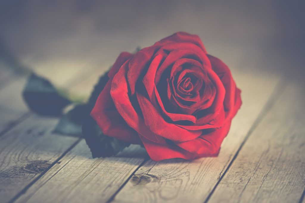 Top 20+ Rose Day Images, Greetings, Picture & Wallpaper 2020